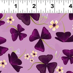 OXALIS - ORCHID