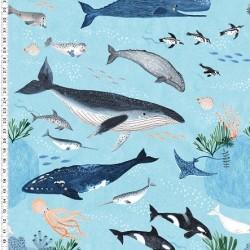 Feature Ocean Life