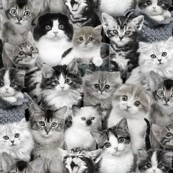 Cute Kittens - GRAY