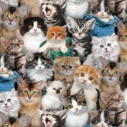 Cute Kittens - MULTI