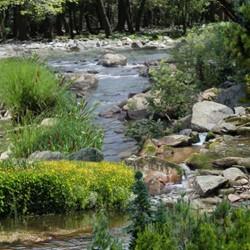 Creeks - GREEN