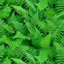 Ferns - GREEN
