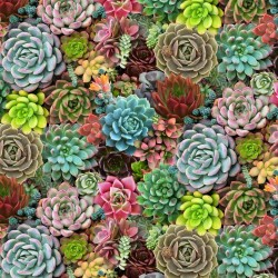Succulents Packed - MULTI