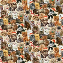 Packed Kittens - CREAM