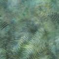 McKenna Ryan Digital  - PAINTED FOREST