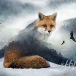 FOX PANEL DIGITAL (66CM)