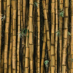 Digital Bamboo - BAMBOO