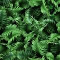 NATURES NARRATIVES DIGITAL - FOREST FLOOR