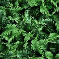 Ferns Digital