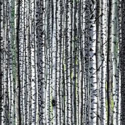 Birch Tree Trunks Digital