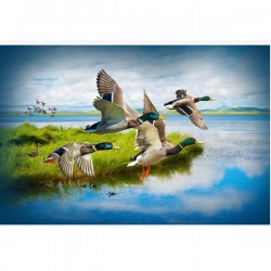 Ducks Digital Panel (74cm) - MALLARD