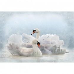 Panel - Swans 76cm - LAKE