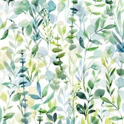 Plants - EUCALYPTUS