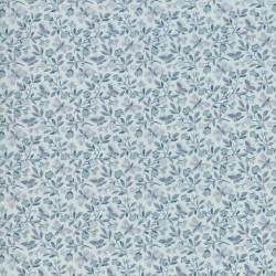 Aricia - TONAL BLUE