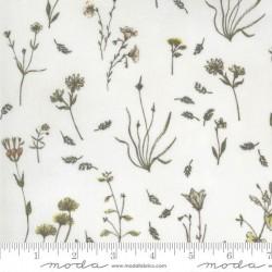 Wildflowers - PARCHMENT