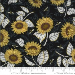 Sunflower Studies - EBONY