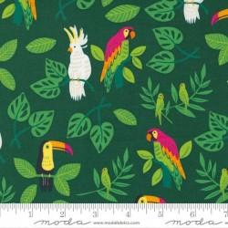 Birds in Paradise - PALM