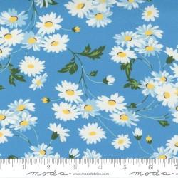 Real Daisy - BLUE