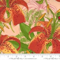 Carolina Lilies - PEACH