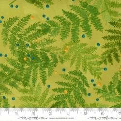 Ferns - GRASS