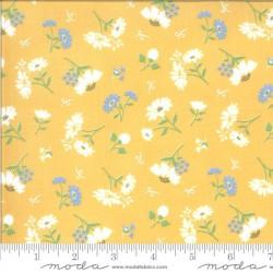 Daisies - SUNNY