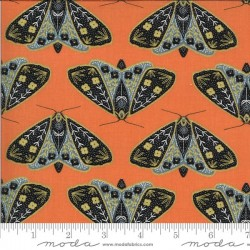Dainty Moths - POPPY