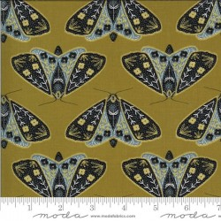 Dainty Moths - UMBER