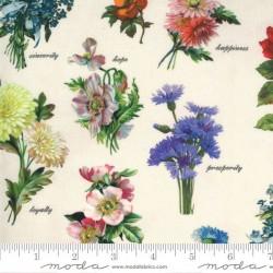 Botanicals - PARCHMENT