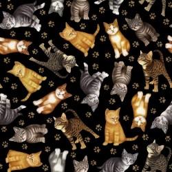 Kitten Toss - BLACK