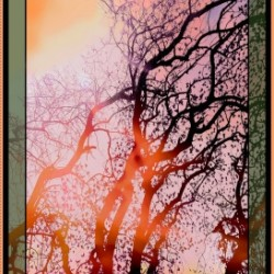 AT DAWN TREE PANEL (60CM)