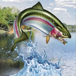 Trout Panel Digital (60cm)