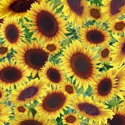 Sunflowers - SUNFLOWER