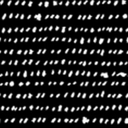 Specks - BLACK