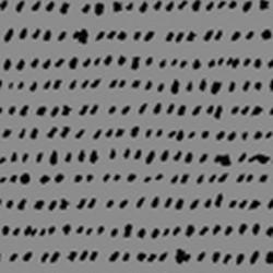 Specks - GREY/BLACK