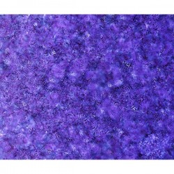 Effervescence - PURPLE