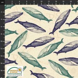 Whales - CREAM