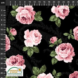 Large Feature Roses - BLACK