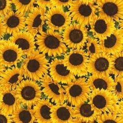 Packed Sunflowers - SUNFLOWER