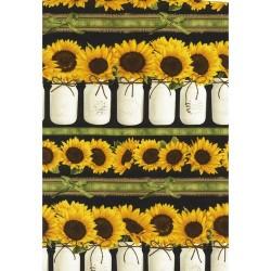 Sunflower Stripe - BLACK