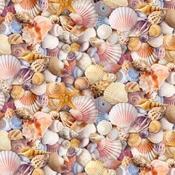 Packed Beach Shells - MULTI