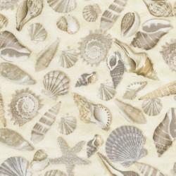 Shells - NATURAL