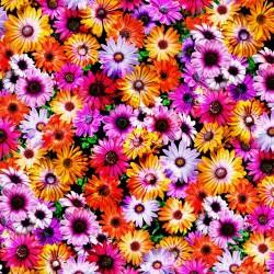 Electric flowers - MULTI