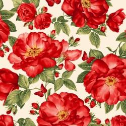 Feature Roses - CREAM