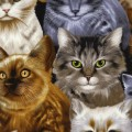 Timeless Treasures - CAT LADY